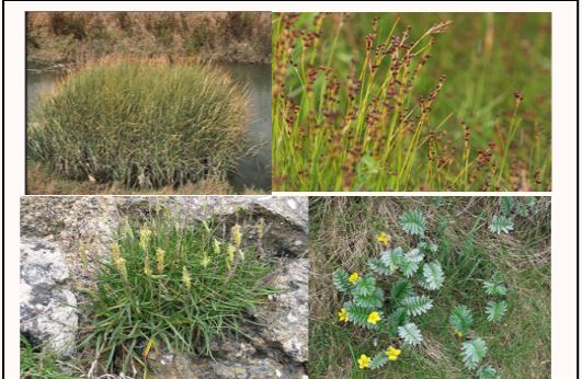 Tidal Elevation and Growth of Wetland Plants